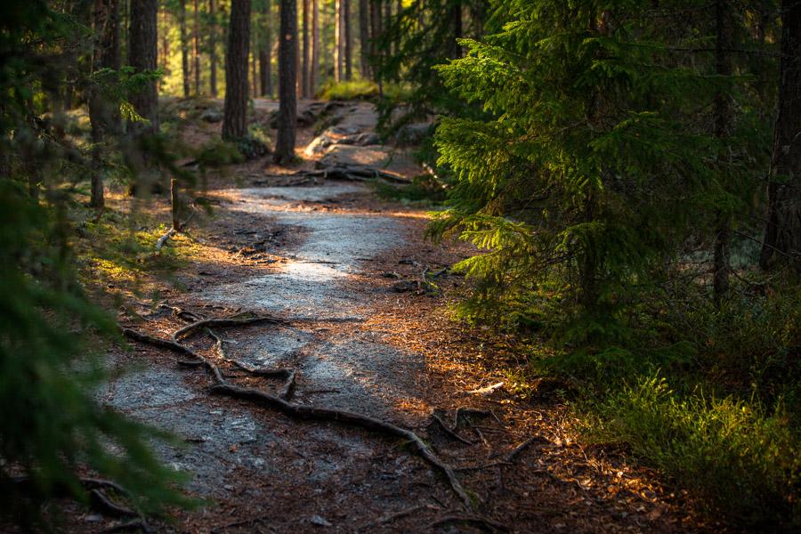 Repovesi kansallispuisto national park lapinsalmi valokuva luontokuva retkeily vaellus