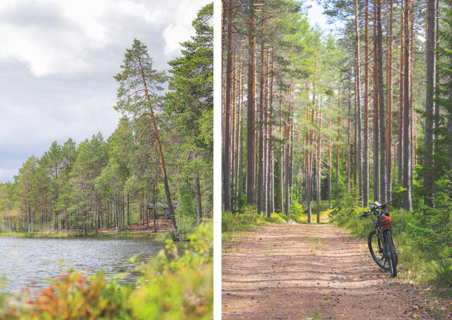 maastopyöräily reitti Seitsemisen kansallispuisto pyöräily reitti maastopyöräilyreitti maastopyöräreitti retkeilyreitti retkeily polku metsäpolku puut metsä pyöräreitti pyöräilyreitti kesä maastopyörä aarimetsä aarniometsä luonnontilainen pyörä liikunta virkistys aktiviteetti luonto ulkoilu ulkoilla vapaa-aika harrastus harrastaa Seitseminen Ylöjärvi