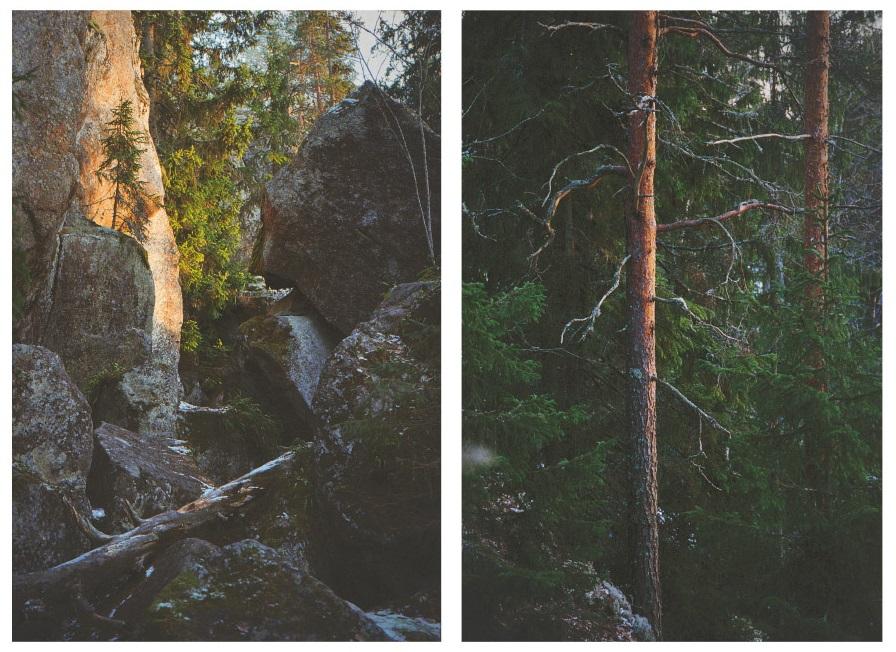Canon EOS Elan 7ne + Agfa Vista 400. Rokokallio, Vihti 12/2018.