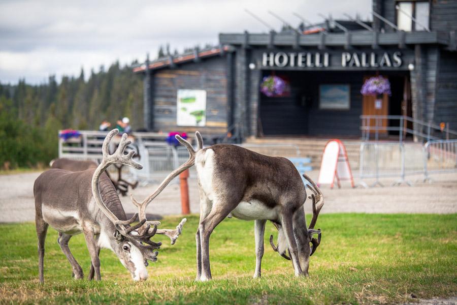 Pallashotelli Hotelli Pallastunturi Pallas Pallas-Yllästunturi National Park