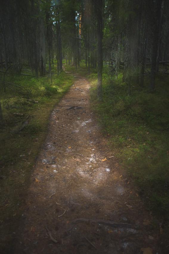 Pyhä-Häkki Pyhä-Häkin kansallispuisto National Park Finland
