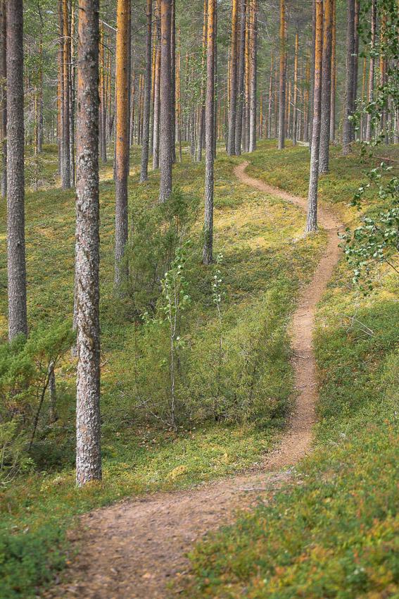 Rokuan kansallispuisto MTB maastopyöräily Rokua National Park Finland