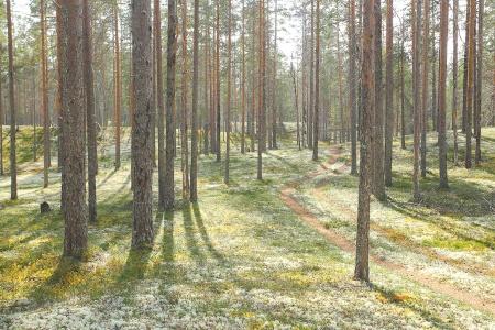 Rokuan kansallispuisto MTB Rokua National Park Finland