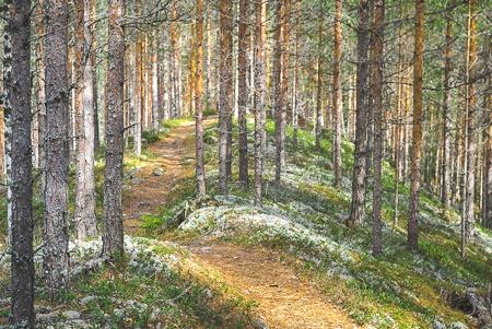 pyöräily Poronpolku maastopyöräily Loppi Komion luonnonsuojelualue MTB Finland