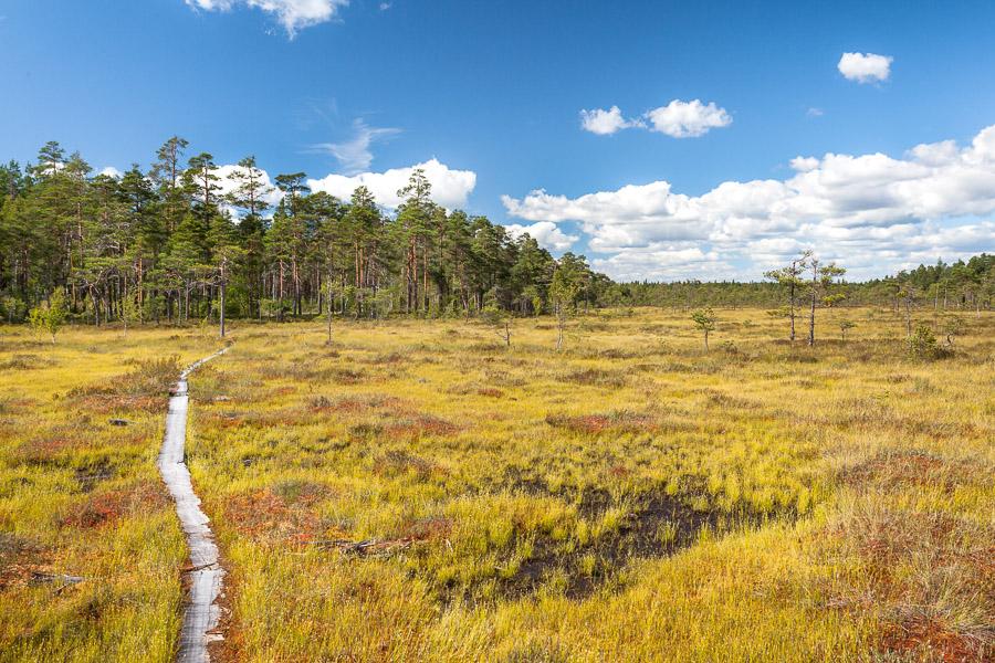 Teijon kansallispuisto Punassuo