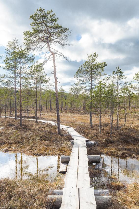 Luutalammi Komion luonnonsuojelualue Poronpolku maastopyöräily Loppi MTB Finland