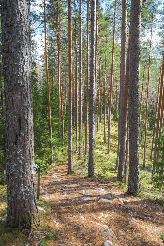 Poronpolku maastopyöräily Loppi Komion luonnonsuojelualue MTB Finland