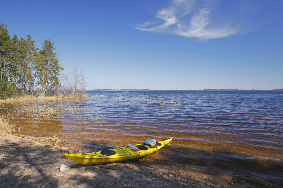 melonta suur-saimaa saimaa kayaking taipalsaari Valley Avocet