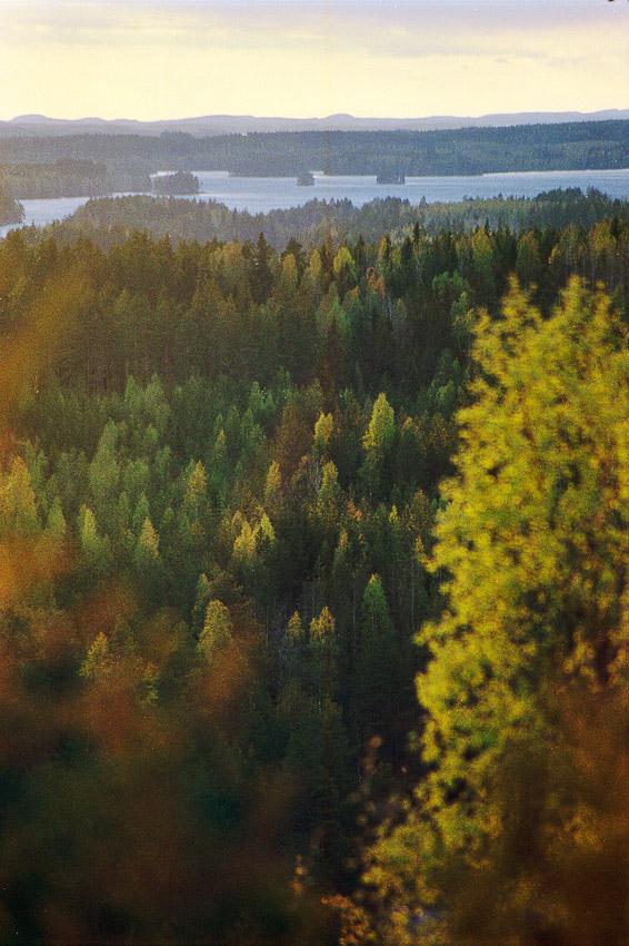 kalajanvuori konnevesi konneveden kansallispuisto old forest finland