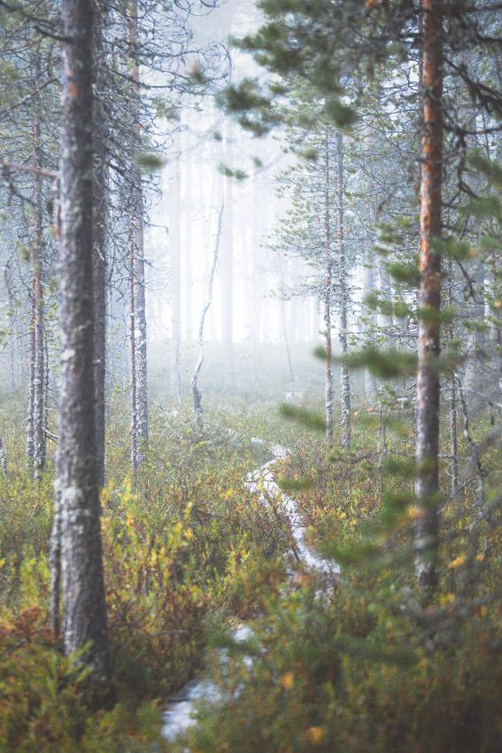 Hossan kansallispuisto Foggy morning at Keihäslampi.