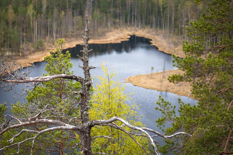 View from Hauklamminvuori Repovesi