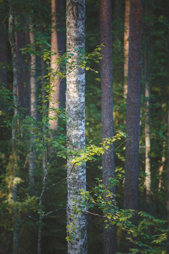 kelvenne päijänne kansallispuisto kayaking lake päijänne finland