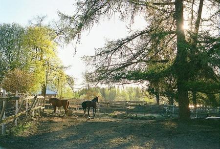 35mm film Aulanko hämeenlinna fujifilm superia xtra 400