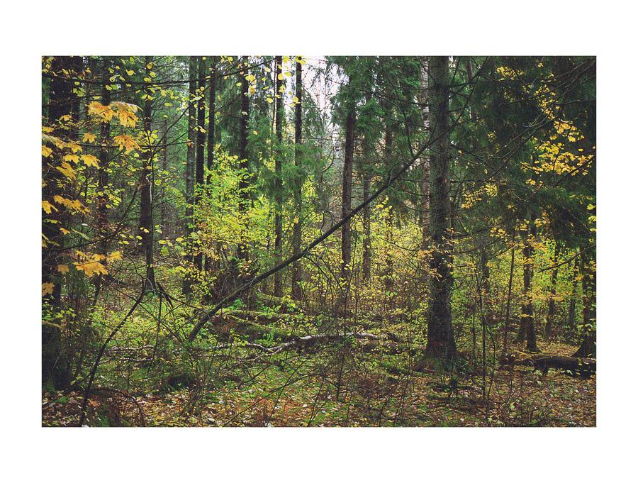 Haltialan luonnonsuojelualue Pitkäkoski Helsinki Vantaa