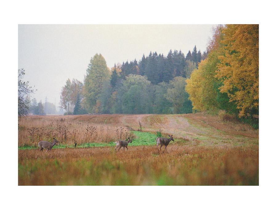 Haltialan luonnonsuojelualue Pitkäkoski Helsinki Vantaa valkohäntäpeura