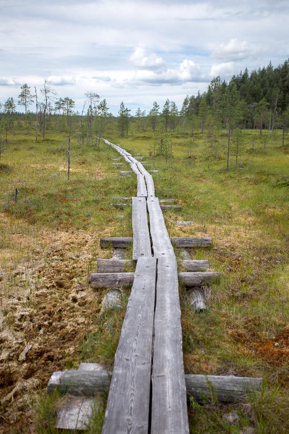 Pyhä-häkin kansallispuisto suo