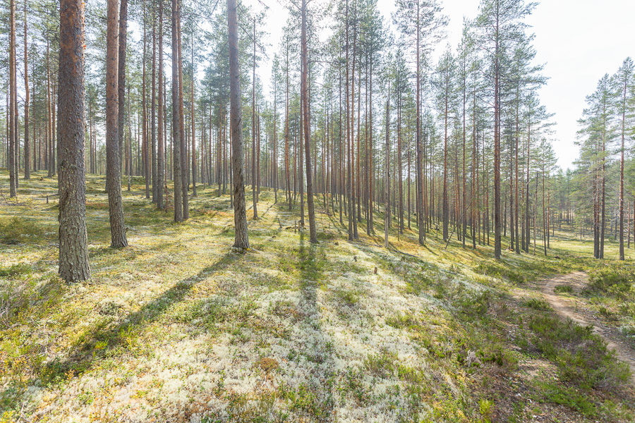 maastopyöräily Rokuan kansallispuisto MTB Rokua National Park Finland