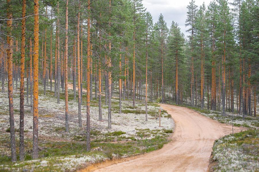 Rokuan kansallispuisto Rokua National Park Finland