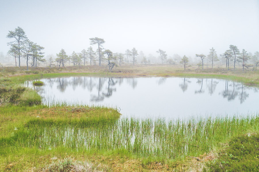Kauhaneva-Pohjankangas kansallispuisto Kauhalammi