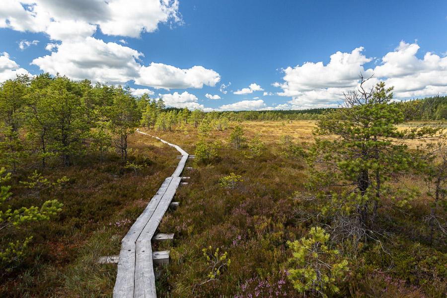 Teijon kansallispuisto, Järvenpäänsuo
