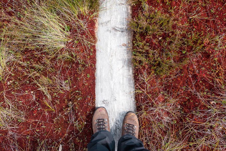 Punassuo Teijon kansallispuisto