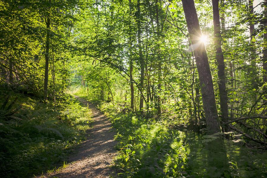 Sahajärven luonnonsuojelualue, Teijo