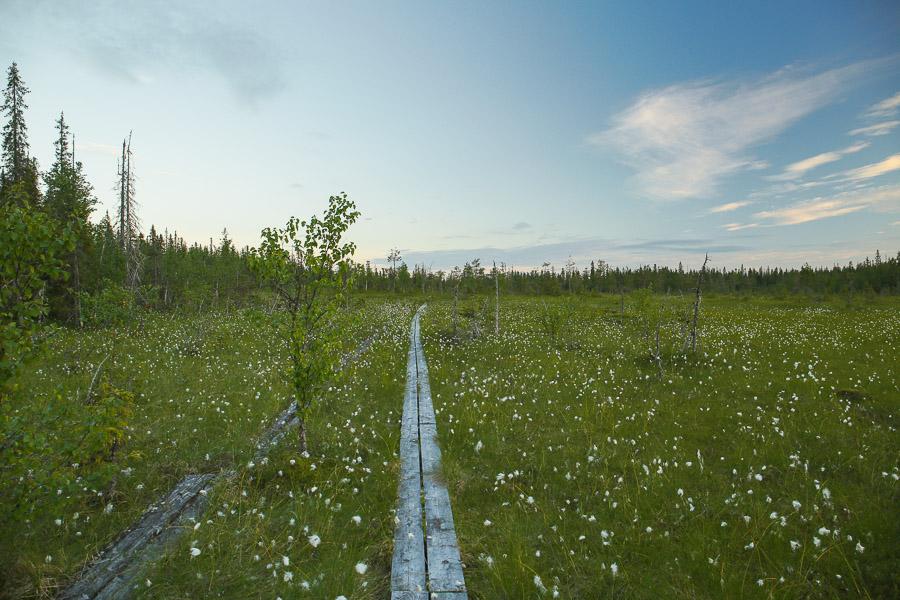 suo pitkospuut Paljakan luonnonpuisto Paljakka vanha metsä Puolanka